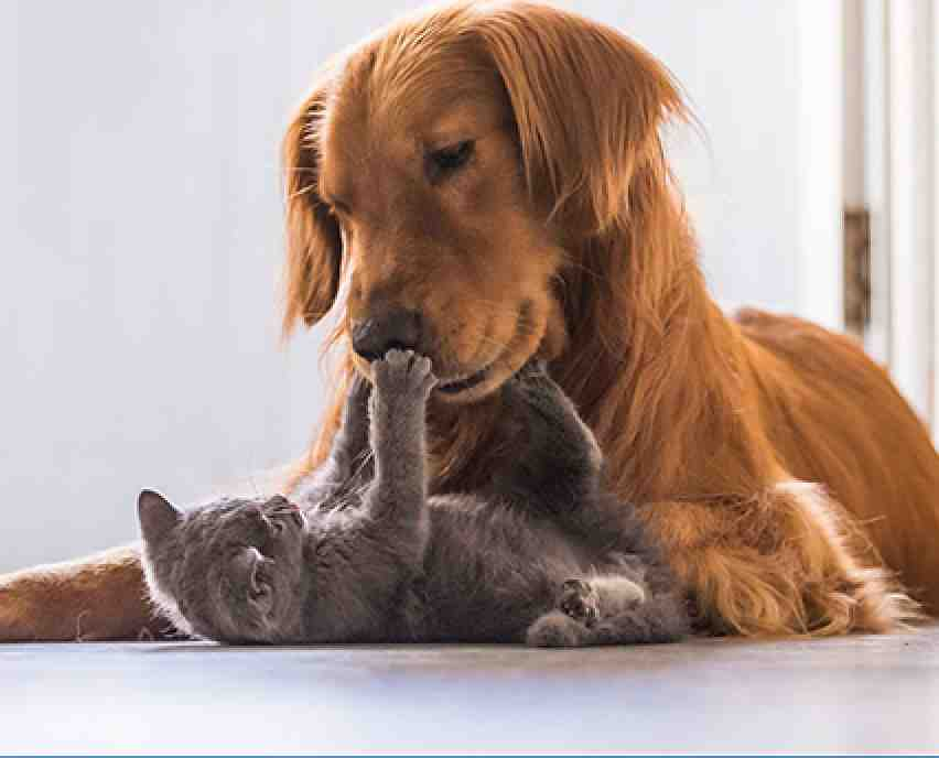 dog and cat cuddles