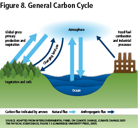 Figure 8: General Carbon Cycle